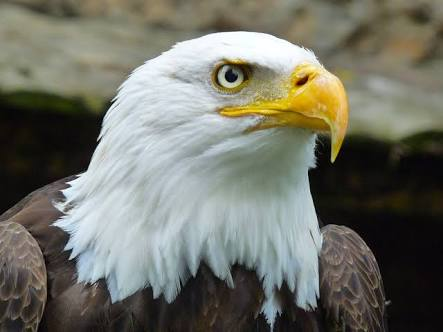 FACTS: SEE SIX LEADERSHIP PRINCIPLES TO LEARN FROM AN EAGLE ...